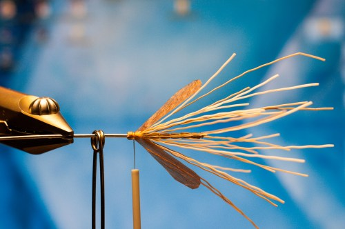 Forelle Äsche Fliegenbinden Schnake Crane Fly Daddy Long Legs12