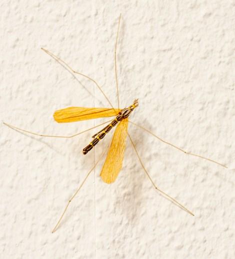 Forelle Äsche Fliegenbinden Schnake Crane Fly Daddy Long Legs21