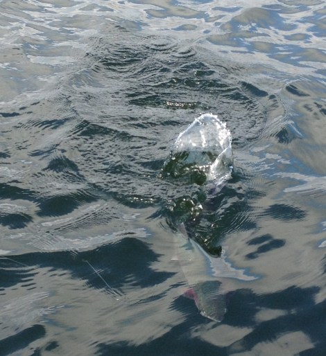Forelle Äsche Fliegenfischen Regenbogenforelle Rutland Water