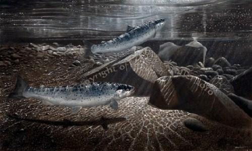 Blog_Fliegenfischen_Kunst_David_Miller_Meerforelle