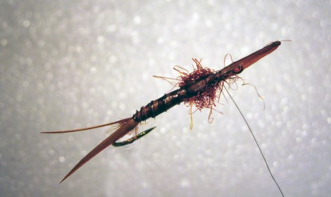 Hans Hilgers Large Stonefly