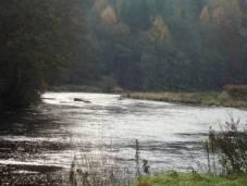 River Eden Lacy