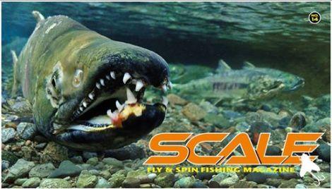 SCALE#14_cover