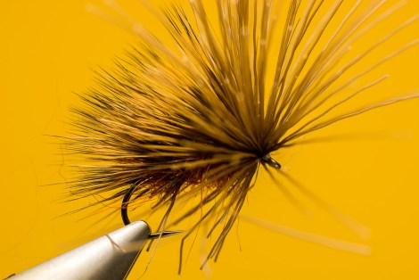 Sven_Ostermann_Brown_Sedge_Hog5