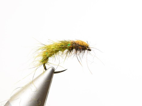 Rhyacophila_Caddis_Sedge_Pupa15