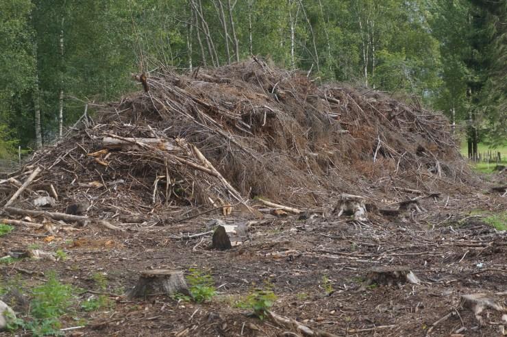 Ence uses biomass