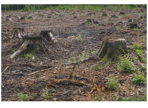 Schweighofer illegal timber illegal logging