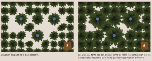 clara selectiva 5-6