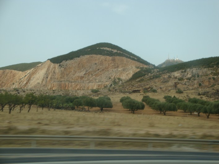 trees next to the highway in Marocco