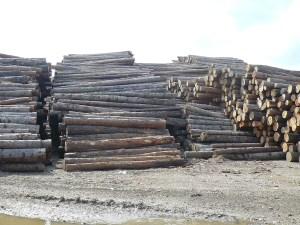 Supply of logs
