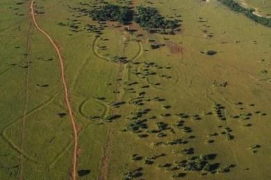virgin Amazonian rainforest