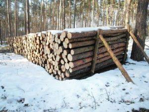 Polska små skogsföretag ZUL och deras problem.