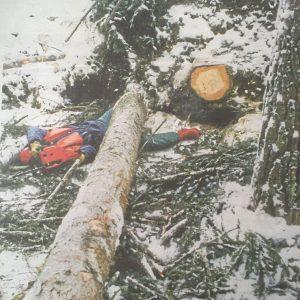 Wypadki przy pracy w lasych szwedzkich.