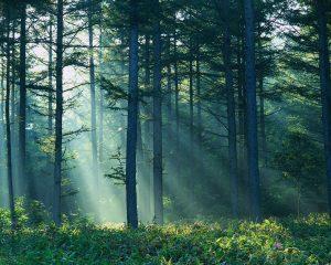 Przysłowia o lesie i drzewach.