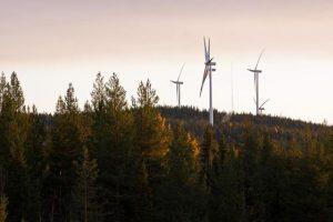 Wpływ elektrowni wiatrowych na ptaki i nietoperze.