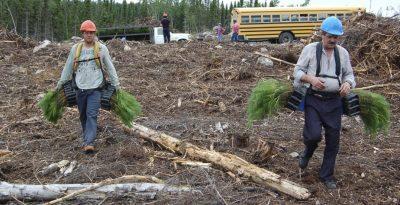 Odnawianie i zalesianie - czynności warte docenienia.