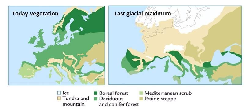 Post-glacial Vegetation of Canada