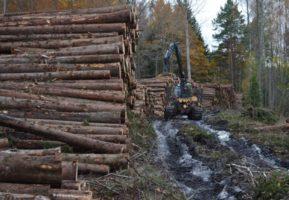 Ciągle te pożytki z lasu