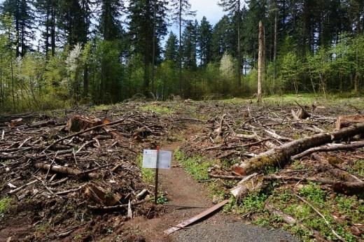 zrąb biomasy leśnej