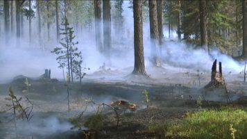 Szwedzkie głosy, zdania i opinie o pożarach leśnych.