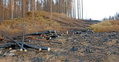 Pokłosie szwedzkich pożarów lasu.