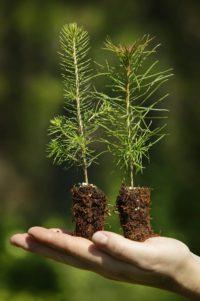 Skandynawskie naszynowe sadzenie lasu