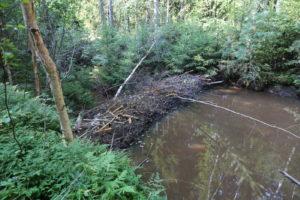 Pożytki ze zwierzyny leśnej