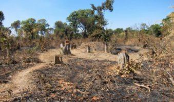 Wylesiania