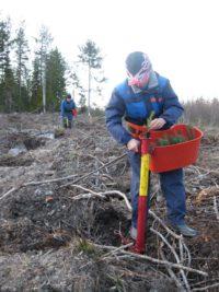 Polacy w szwedzkich lasach