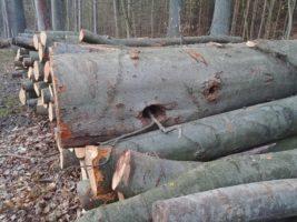 Zgodnie z zasadami sztuki leśnej