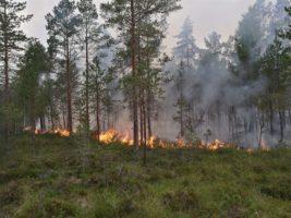 Pożary lasu