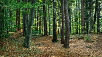 Las liściasty