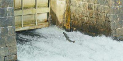 Odbudowa rzek
