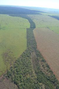 zielone korytarze ekologiczne