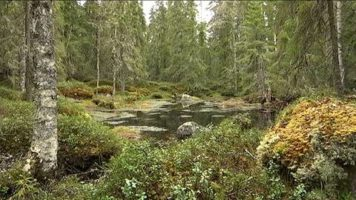 Lasy Narodowe