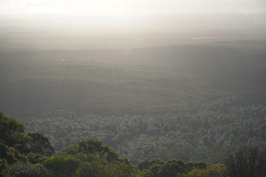 lasy na Tasmanii