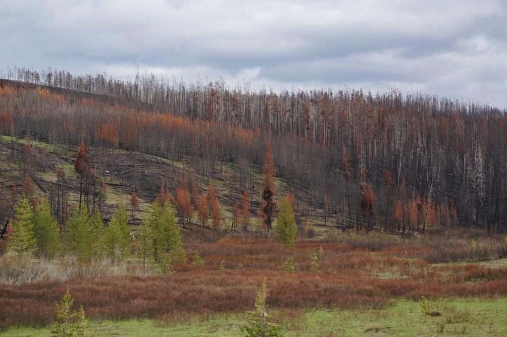 pożary lasów Yellowstone