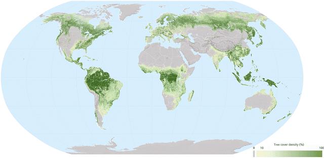¿Cuáles son los países más boscosos del mundo? ¿Y los menos?