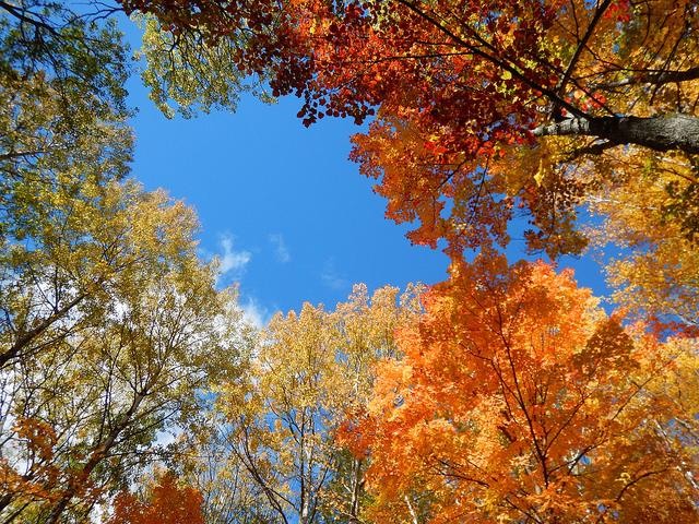 Los colores del otoño (o el eterno tema pendiente)