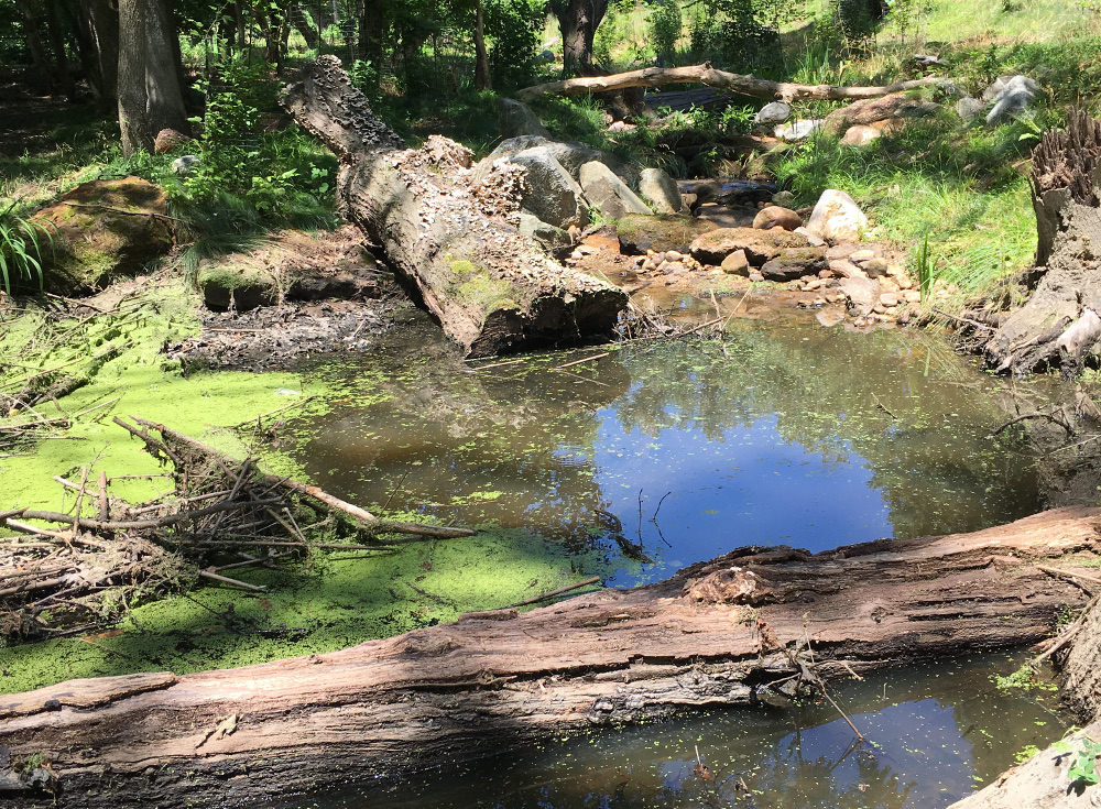 Downed logs and tree limbs provide organic material that drives biological activity and supports a healthy, functioning stream system.