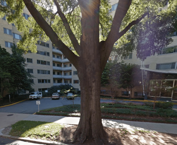 A Google Streetview image of the tree in 2012.