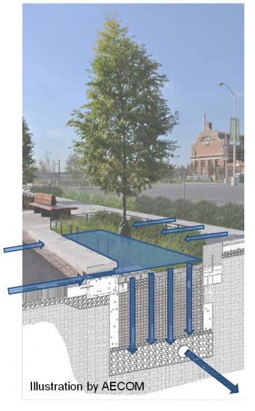 Rendering of a DC bioretention facility with street tree (photo & diagram courtesy Meredith Upchurch of DDOT)