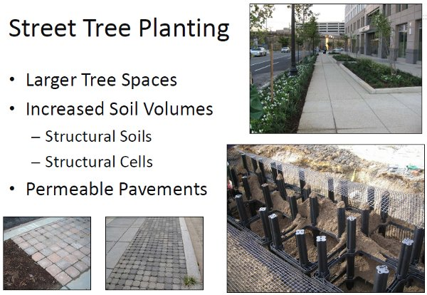"""Street tree planting. (DDOT, """"Creating Green Streets in DC"""")"""