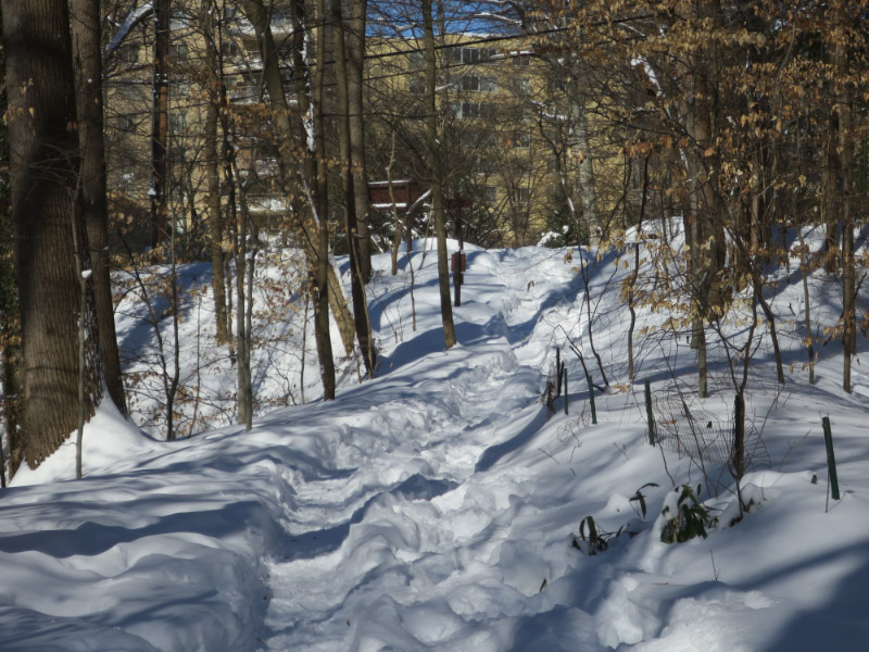 Beginning of Soapstone Trail from Albemarle
