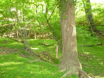 Old Broad Branch stream bed