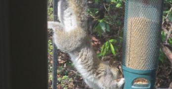 Backyard Nature: Never bet against the squirrels