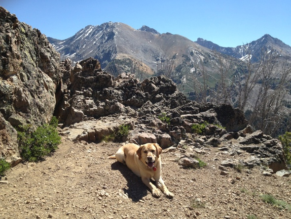 Ty enjoys a spectacular view in the mountains of Idaho.