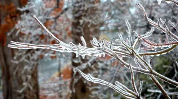 icy branch 2