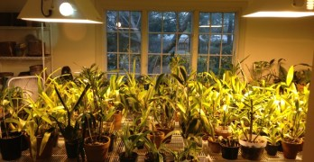 Meet your neighbors: One man's orchid obsession