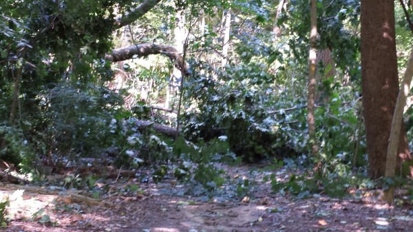 Downed tree on Soapstone trail near Linnean.